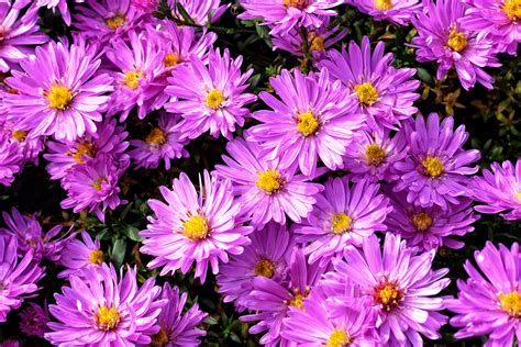 gambar struktur menanam tekstur ungu daun bunga