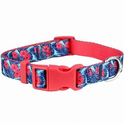 Dog Collar Hibiscus Parisian Pet Baxterboo