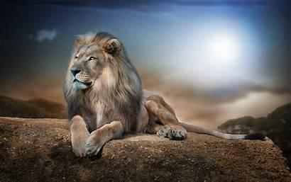 Lion 4k Wallpapers Rock Backgrounds Desktop Ultra