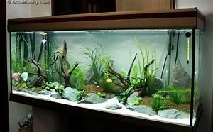 Aquarium Dekorieren Ideen : aqu rio de agosto 39 10 na era de aqu rios peixes ornamentais ~ Bigdaddyawards.com Haus und Dekorationen