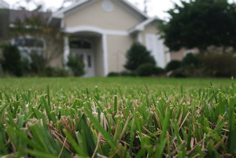 Turfgrass Selection For Your Florida Lawn