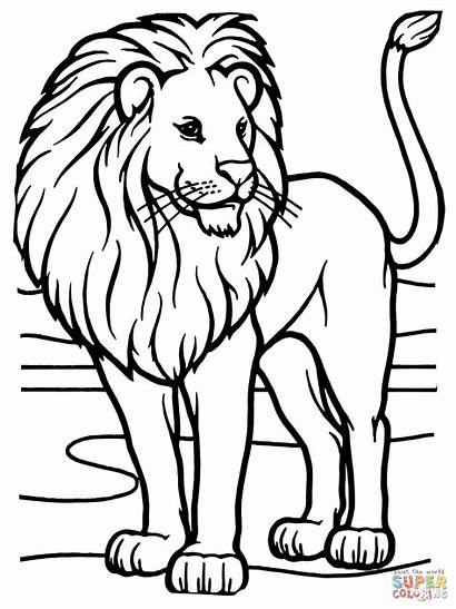 Coloring Lion Pages African Male Printable Drawing