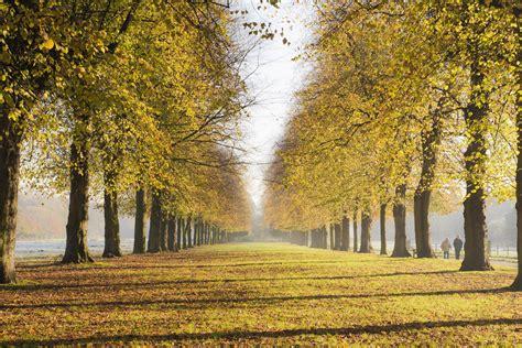 sunday photo autumn  england  stunning lime avenue
