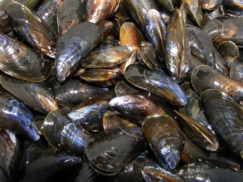 moules  la mariniere la recette du dredi