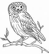 Owl Coloring Owls Pages Snow sketch template