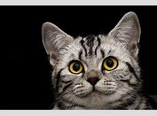 killer katze ; Foto & Bild tiere, haustiere, katzen