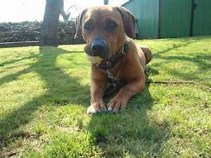 Steuern Und Versicherung Berechnen : pflegehunde wer kommt f r steuern und versicherung auf ~ Themetempest.com Abrechnung