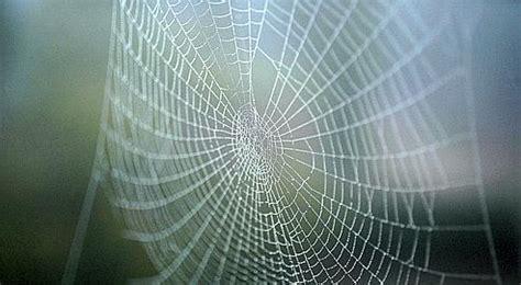 ii la toile d araign 233 e
