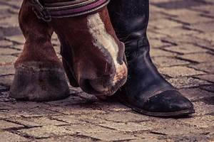 Conformation And Hoof Health  How Faults Affect Feet