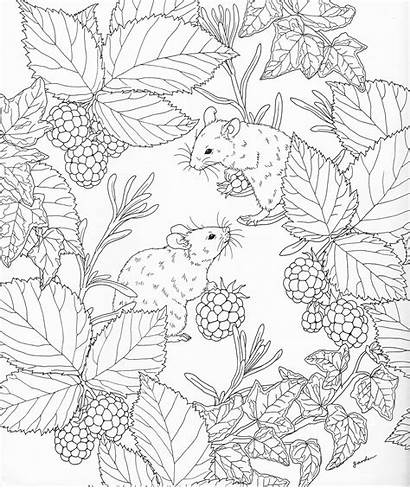 Coloring Adult Nature Pages Books Adults Printable