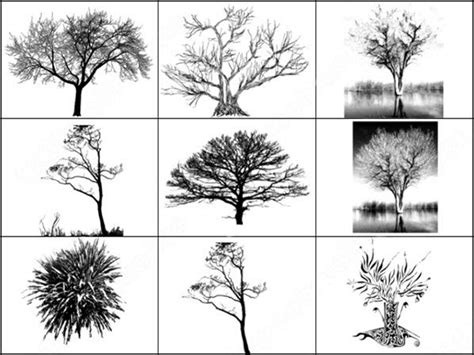 Architecture Trees Library Photoshop Brushes Download (82