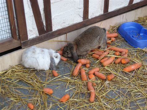carrots rabbits eating favorite foods december reminder seeing remember