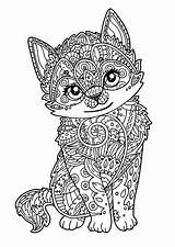 Coloring Cat Adults Printable sketch template