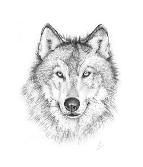 ideas  wolf drawings  pinterest dog