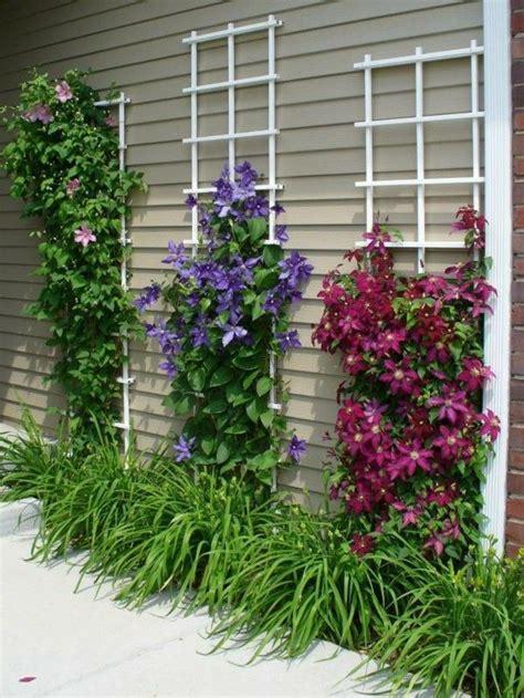 Best 25+ Climbing Flowering Vines Ideas On Pinterest