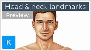 Surface Anatomy Landmarks Of The Head And Neck  Preview