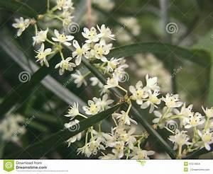 Kleine Weiße Truhe : wei e kleine blume bl ten stockfoto bild 47074654 ~ Indierocktalk.com Haus und Dekorationen