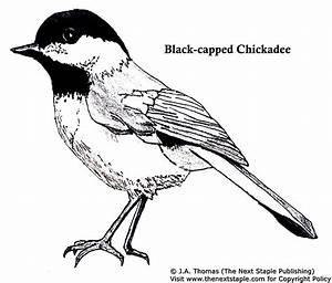 Chickadee Colouring Page Chickadees Pinterest