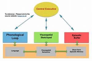 Baddeleys Working Memory Model For Aqa Psychology A Level