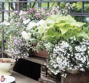 Balkonkästen Gestalten Ohne Blumen : balkonkasten mit lobelien begonien und impatiens bild 15 living at home ~ Bigdaddyawards.com Haus und Dekorationen