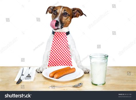 dog eating at table dog eating on table stock photo 96101108 shutterstock