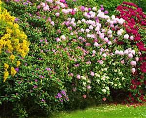 Quels Arbustes Pour Une Haie : cr er une haie paysag e ou d corative ~ Premium-room.com Idées de Décoration