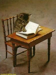 Cute Kitty Cat Reading A Book | Kitty Cat - Kittens ...