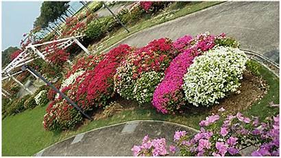 Garden Bougainvillea Park Coast East Very Flowers
