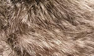 36 Fine And Fluffy Fur Textures Naldz Graphics