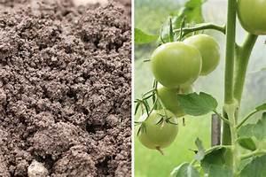 Dünger Für Tomaten : tomaten d ngen wie oft empfehlungen f r tomatend nger ~ Watch28wear.com Haus und Dekorationen