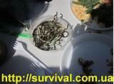 Лечение псориаза дождевыми червями