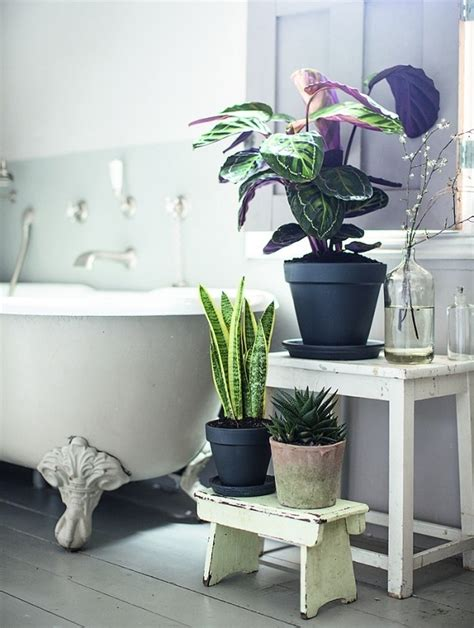 Plants In Bathrooms Ideas by Best Plants For Bathrooms 20 Indoor Plants For The Bathroom