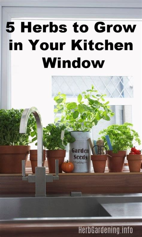 Growing Herbs In Kitchen Window by 5 Herbs To Grow In Your Kitchen Window Herbs