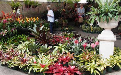 bromeliads australia nursery queensland garden expo new products gardendrum
