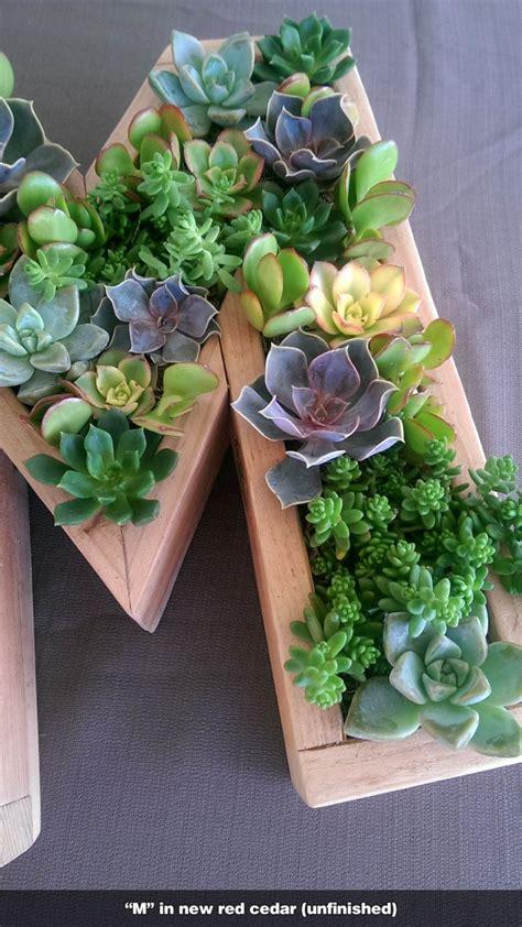 succulent letter 1000 images about wooden succulent letter monogram succulent letters succulent initial on