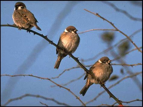 marguerite ustensile de cuisine comptage des oiseaux des jardins nature en ville cergy