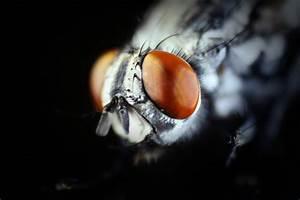 Fly Eye Macro Free Photo - ISO Republic