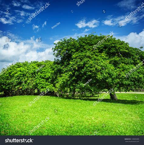beautiful landscape blue cloudy sky green grass field