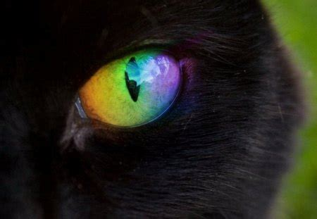 rainbow eye cats animals background wallpapers