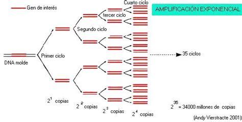 bureau de la pcr técnica de reacción en cadena de la polimerasa pá 2