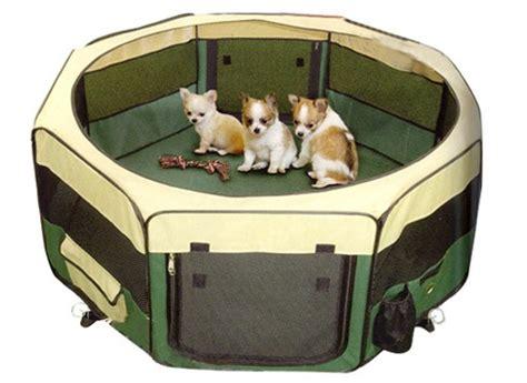 parc pour chiens pour rats aussi pourquoi pas