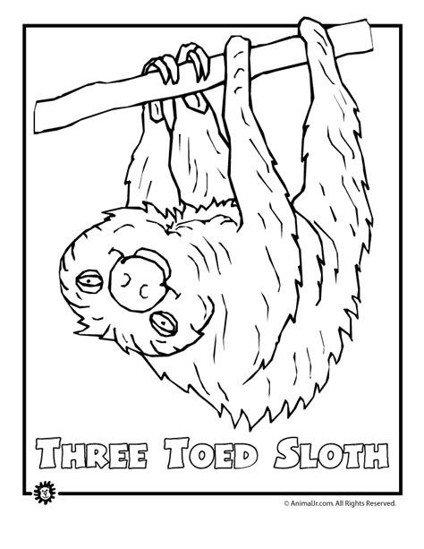 Rainforest Animals Coloring Pages by Endangered Rainforest Sloth School Endangered