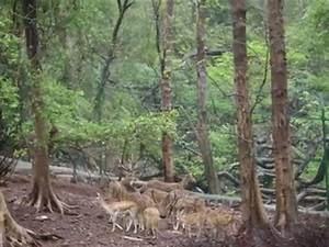 SANJAY GANDHI NATIONAL PARK - YouTube