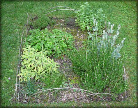 cuisiner citronnelle les plantes aromatiques ou herbes aromatiques une culture
