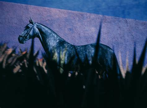 sind kraeuter mineralfutter deganius kraeuter fuer pferde