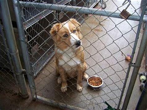 purebreds  kill shelters  dog liberator