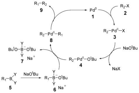 Suzuki Coupling Reaction by Suzuki Reactie