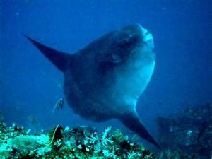 Mola Mola! | Unspun