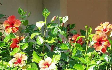 fiori da terrazzo fiori da terrazzo piante da terrazzo come scegliere i