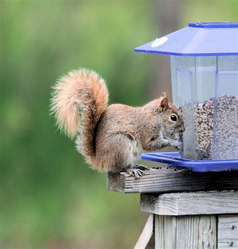 how to keep squirrels out of your birdfeeder southton